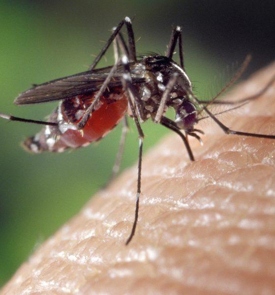 Mobil kan skræmme myggene væk