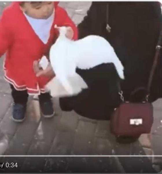 Viralt- Lille pige sætter due på plads