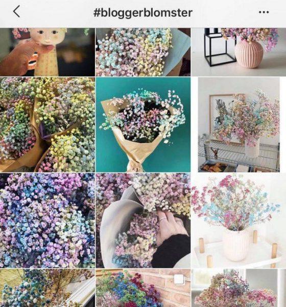 Her er bloggerblomsterne, hele Instagram taler om – og derfor skal du ikke købe dem!