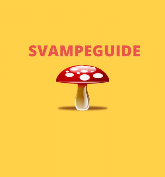 Appbefaling: Er du på svampe?